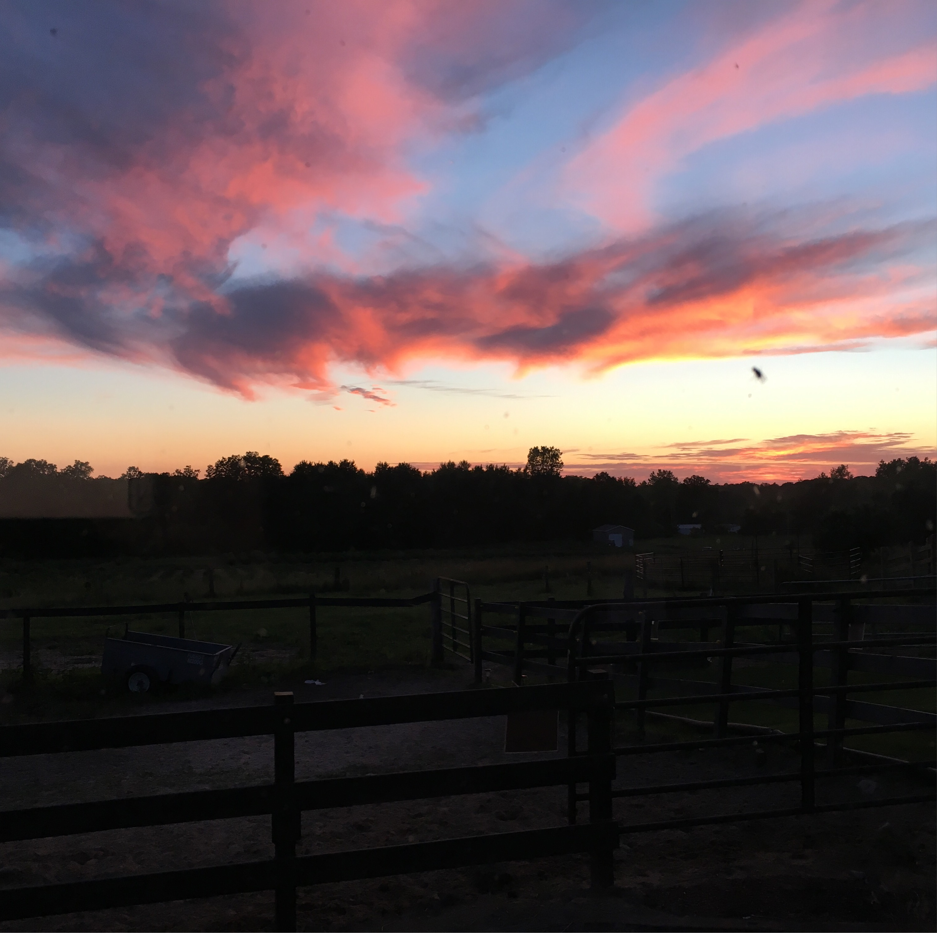 Beautiful sunset at Something Blue Berry farms.